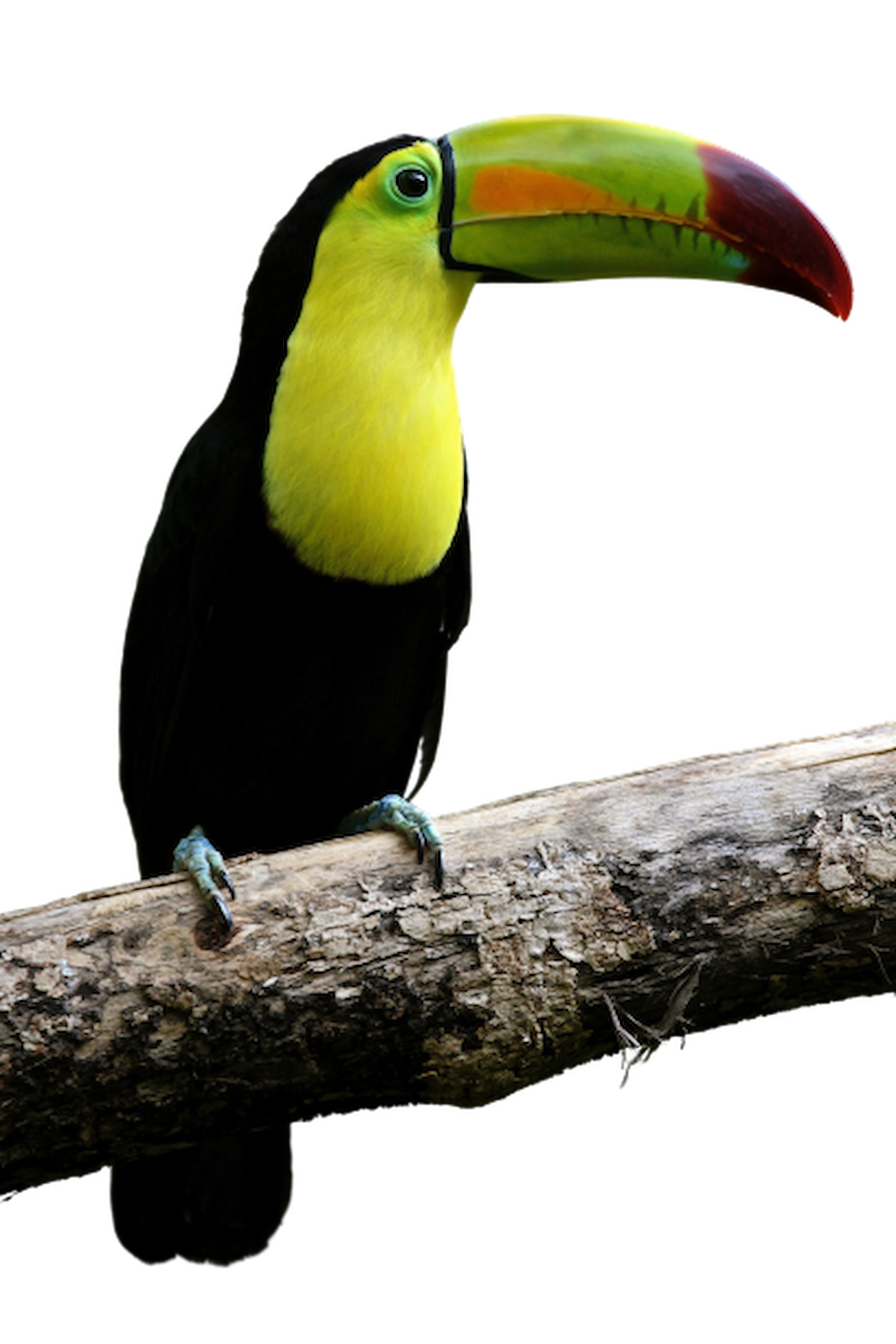 Toucan_the_round_house_rio_dulce-backpackers